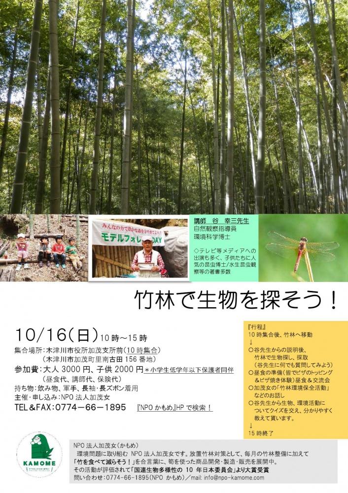 竹林で生物探し2016_000001